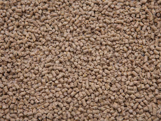 18% Pigeon Pellets - Des Moines Feed | Des Moines Feed