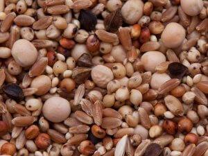 corn free pigeon feed