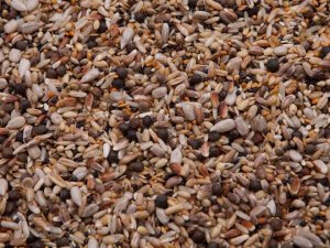 non-gmo pigeon feed mix
